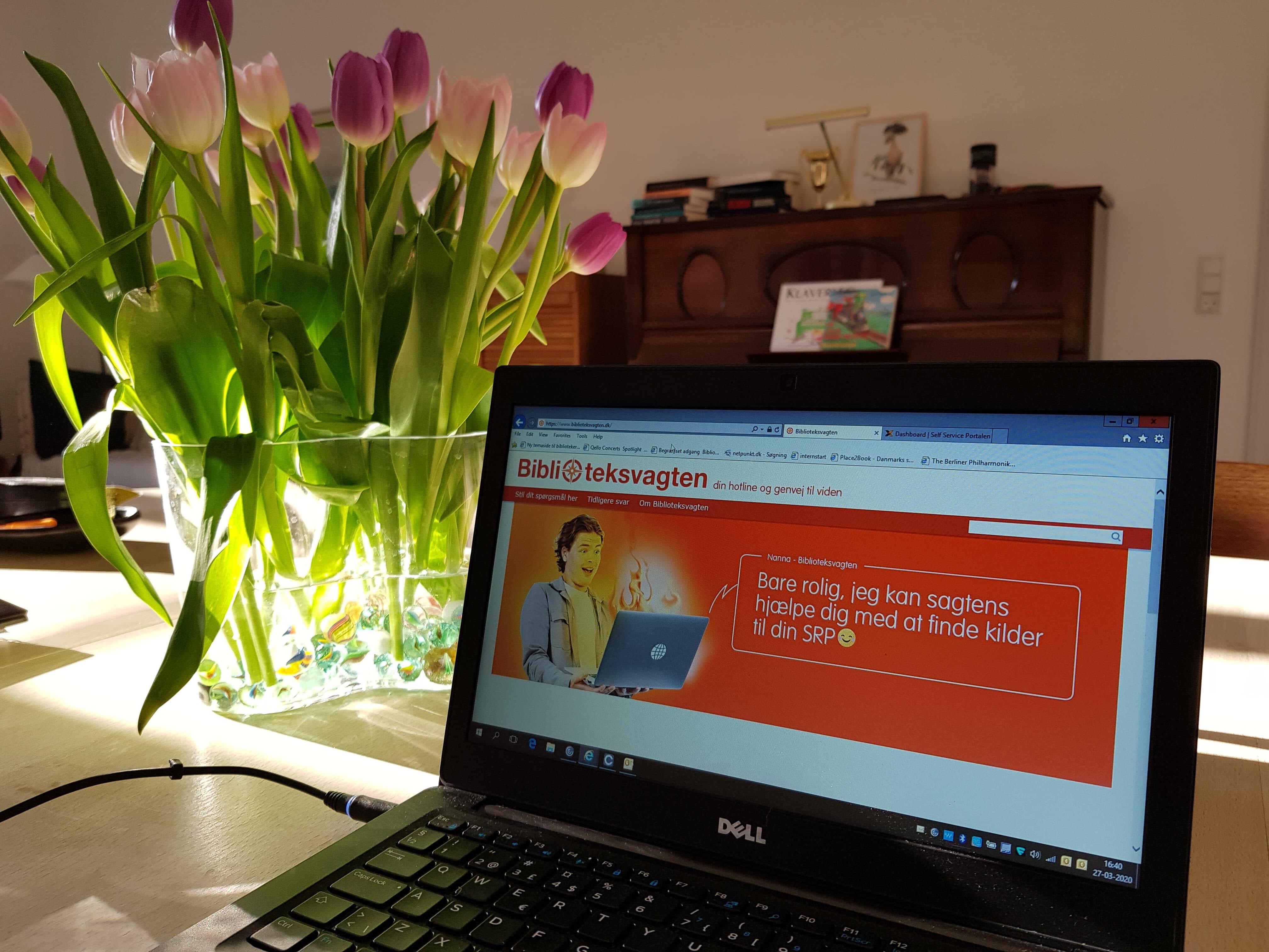 Bærbar computer på spisebordet hjemme hos bibliotekar Marit Juhl. På skærmen er hjemmesiden Biblioteksvagten.dk. Ved siden af computeren står en vase med tulipaner, og sollys strømmer ind.