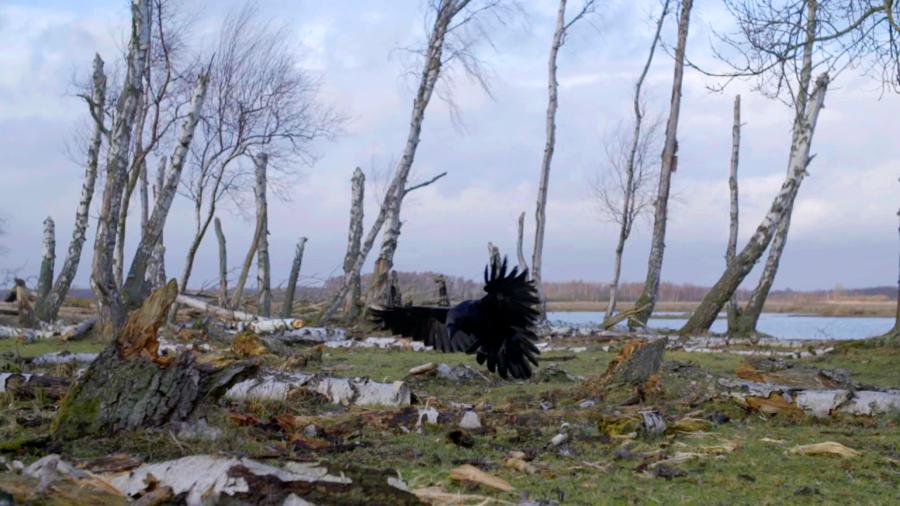 Naturens drama har ofte inspireret musikken. Her slår en ravn ned i et råt landskab.