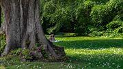 Skoven byder på mange gode aktiviteter i sommerferien og lægger også op til masser af læsning.